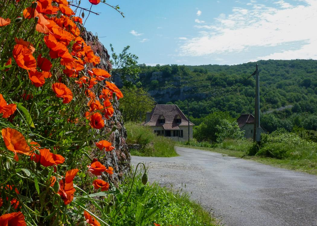 Sauliac - coquelicots et maison traditionnelle _04 © Lot Tourisme - C. Sanchez